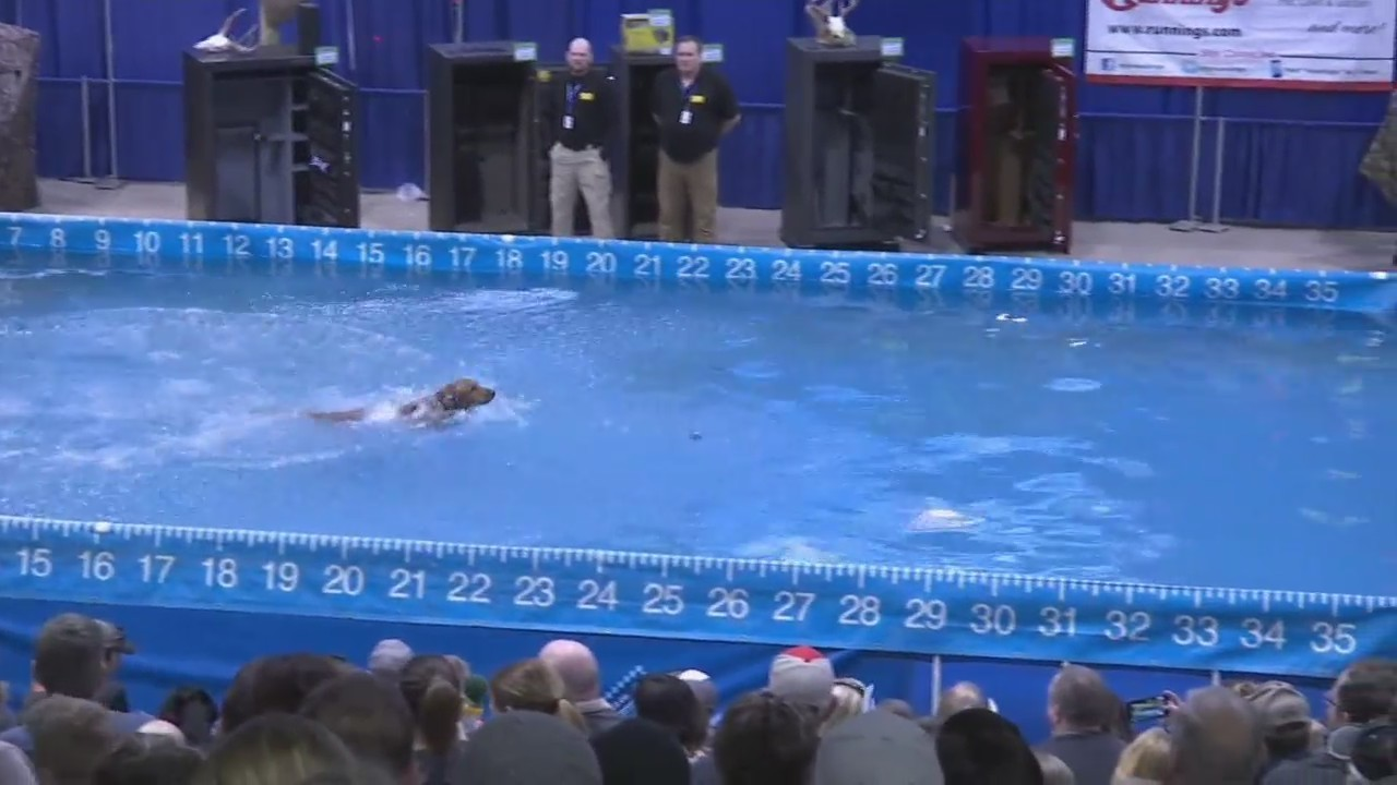 dockdogs stole the show at bismarck mandan s largest sports event