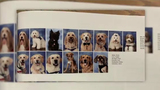 Parkland therapy dogs have own yearbook page