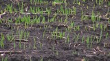 Late Planting Season for Farmers out East
